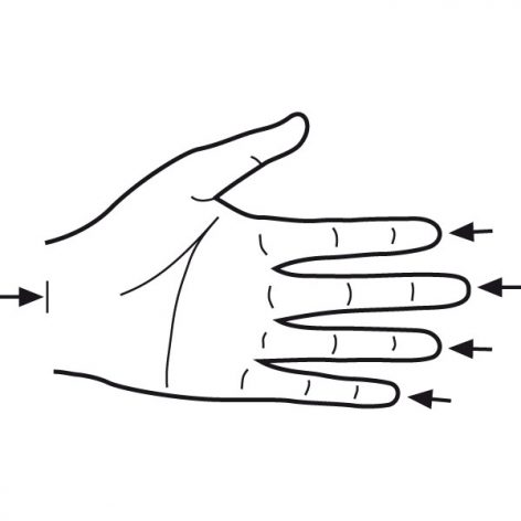 Base of palm to finger tip